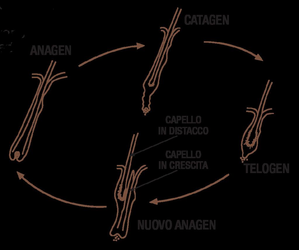 soalria-struttura e ciclo del capello